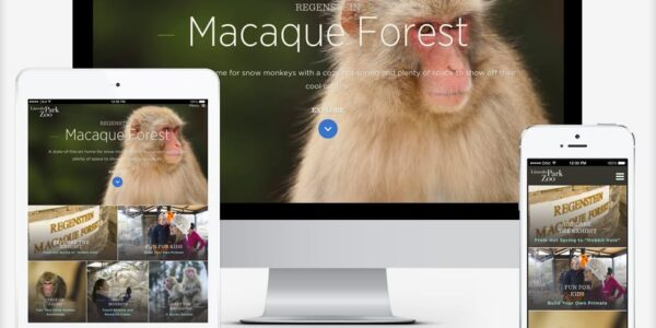 Prototyping the Zoo Experience: Monkey Business and Website Design